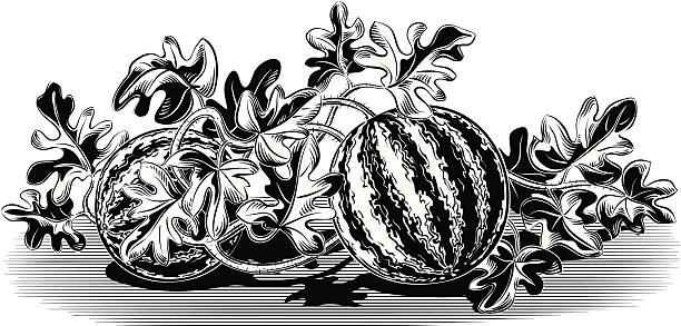 Royalty Free Watermelon Plant Clip Art, Vector Images ...