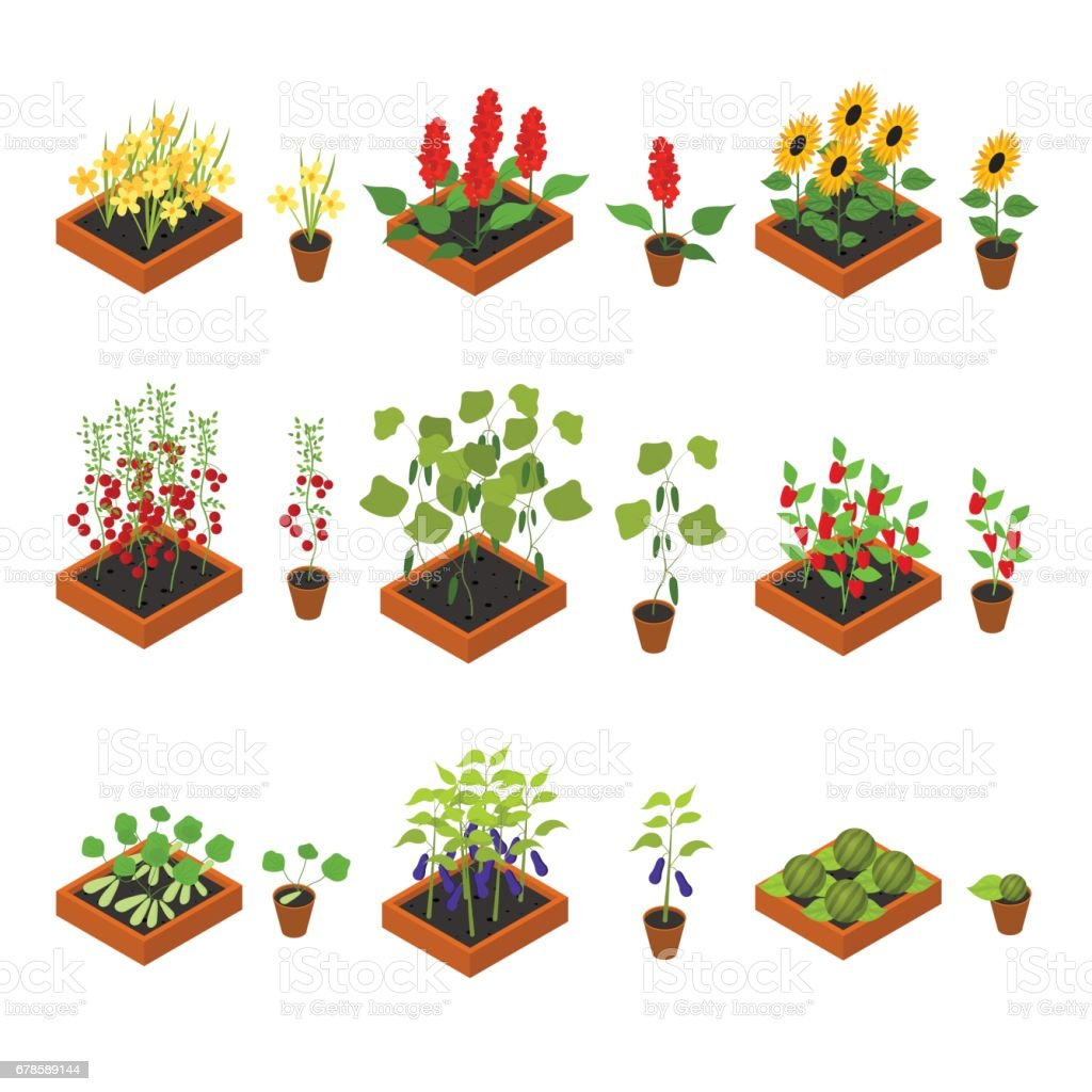 Plant Seedling and Elements Set Isometric View. Vector vector art illustration