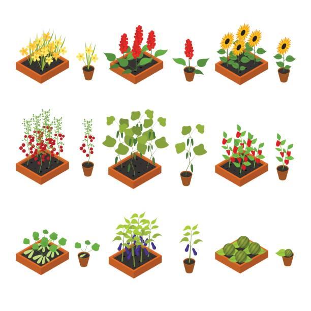 ilustrações, clipart, desenhos animados e ícones de elementos e planta mudas conjunto vista isométrica. vector - horta