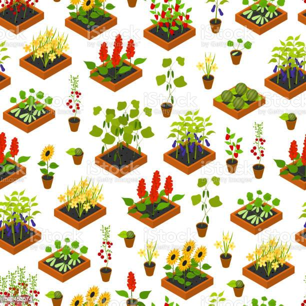 Plant seedling isometric view vector vector id862453574?b=1&k=6&m=862453574&s=612x612&h=s3rdgr1nsmi6jnmjg w7oyepqy bh0usv9ulcmnde80=