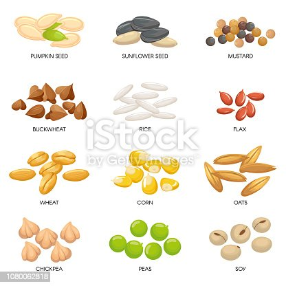Plant seeds. Cereals grains, chickpeas nuts and cellulose grain. Nut and seed. Planting seedling pumpkin, sunflower and chickpea seeds. Isolated cartoon vector illustration icons set