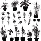 Plant silhouette collection
