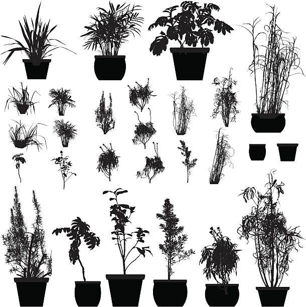 Plant silhouette collection A collection of 25 detailed plant silhouettes. Each plant pot is a different pathway. potted plant stock illustrations