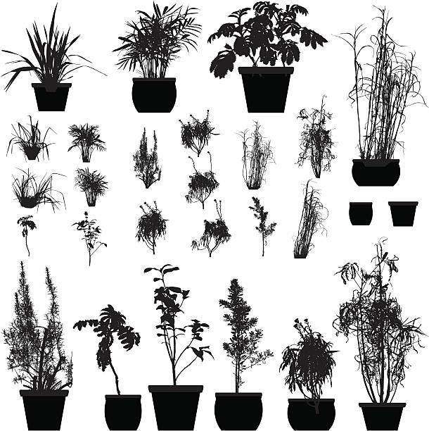 Coleção de silhueta de plantas - ilustração de arte em vetor