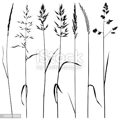 Set of plant silhouettes. Meadow grass, dry ears of grass. Detailed images isolated black on white background. Vector design elements.