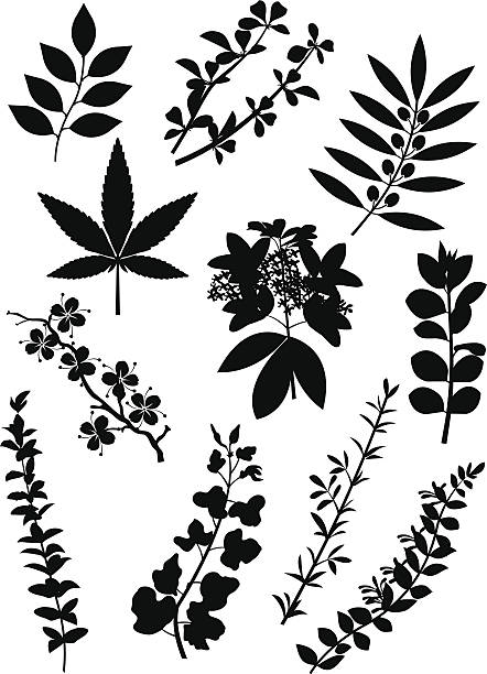 Plant silhouettes A selection of plant silhouettes. honeysuckle stock illustrations