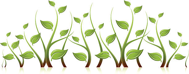 Plant Sprouts vector art illustration