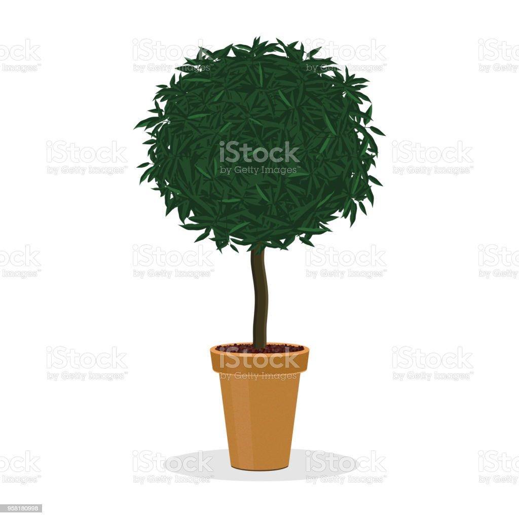 plantes taillées en forme de boule arbre décoratif – cliparts