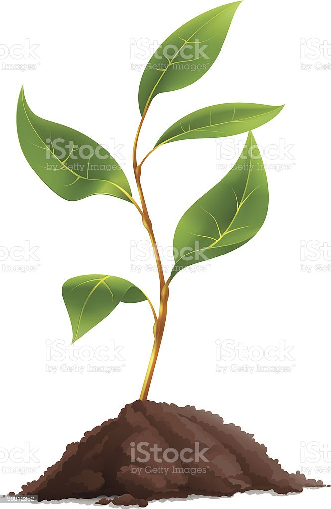 Plant royalty-free plant stock vector art & more images of brown