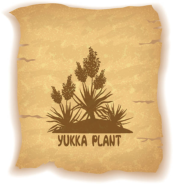 Yucca Illustrations, Royalty-Free Vector Graphics & Clip ...