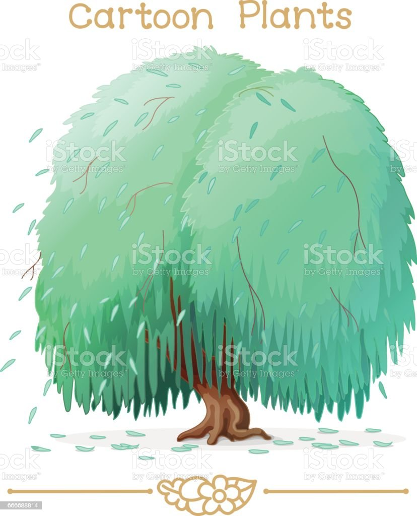 Plantae series cartoon plants: weeping willow vector art illustration