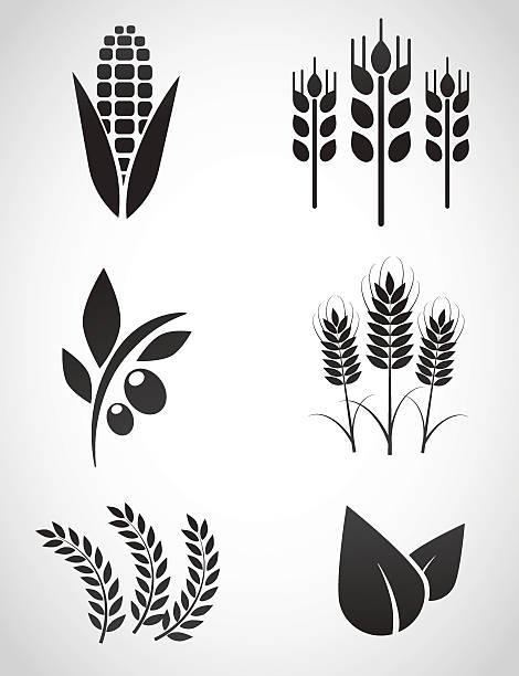 ilustrações de stock, clip art, desenhos animados e ícones de plantation ícone conjunto. - milho