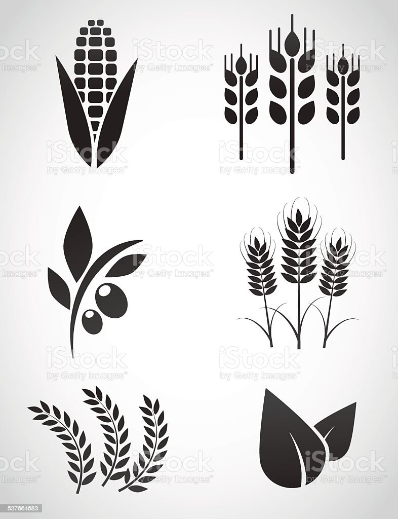 Plantation icon set. vector art illustration