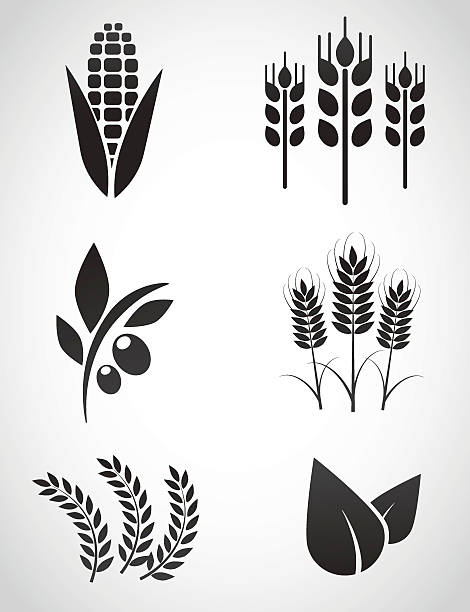 Plantation icon set. Vector illustration. corn crop stock illustrations
