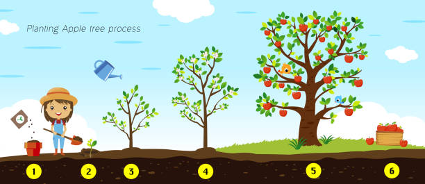 Apple Tree 364 Free Vectors To Download Freevectors