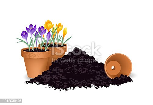 Planting flowers, planting season, Terra cotta flower pots with crocuses and piles of earth, Vector illustration isolated on white background