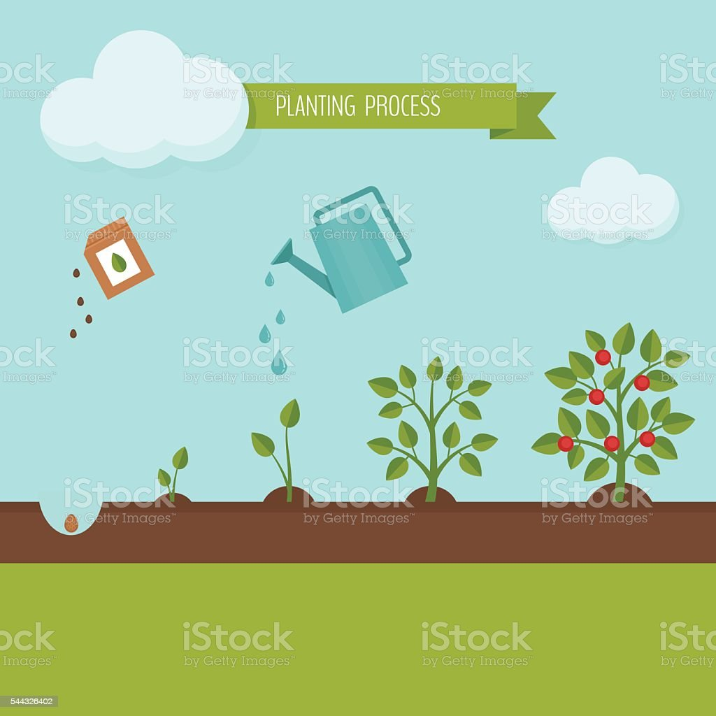 Planting process infographic. vector art illustration