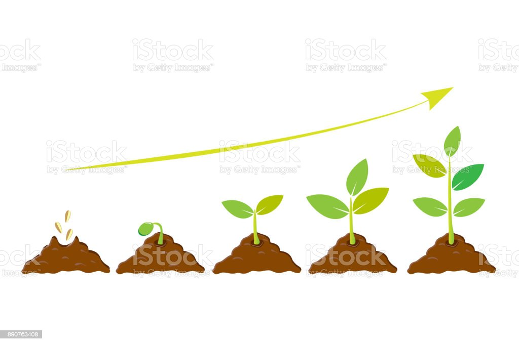 Planting seed sprout in ground. Infographic sequence grow sapling. Seedling gardening tree. Icon, flat isolated on white background. Vector illustration vector art illustration
