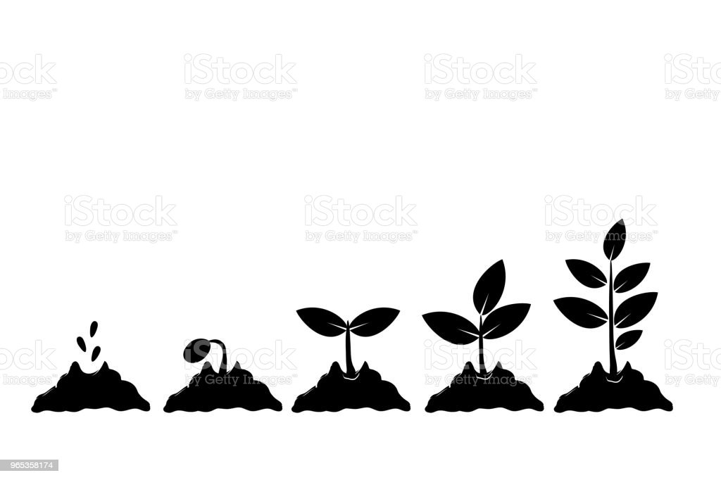Planting seed sprout in ground. Infographic sequence grow sapling. Seedling gardening tree. Icon, flat isolated on white background. Vector illustration royalty-free planting seed sprout in ground infographic sequence grow sapling seedling gardening tree icon flat isolated on white background vector illustration stock vector art & more images of backgrounds