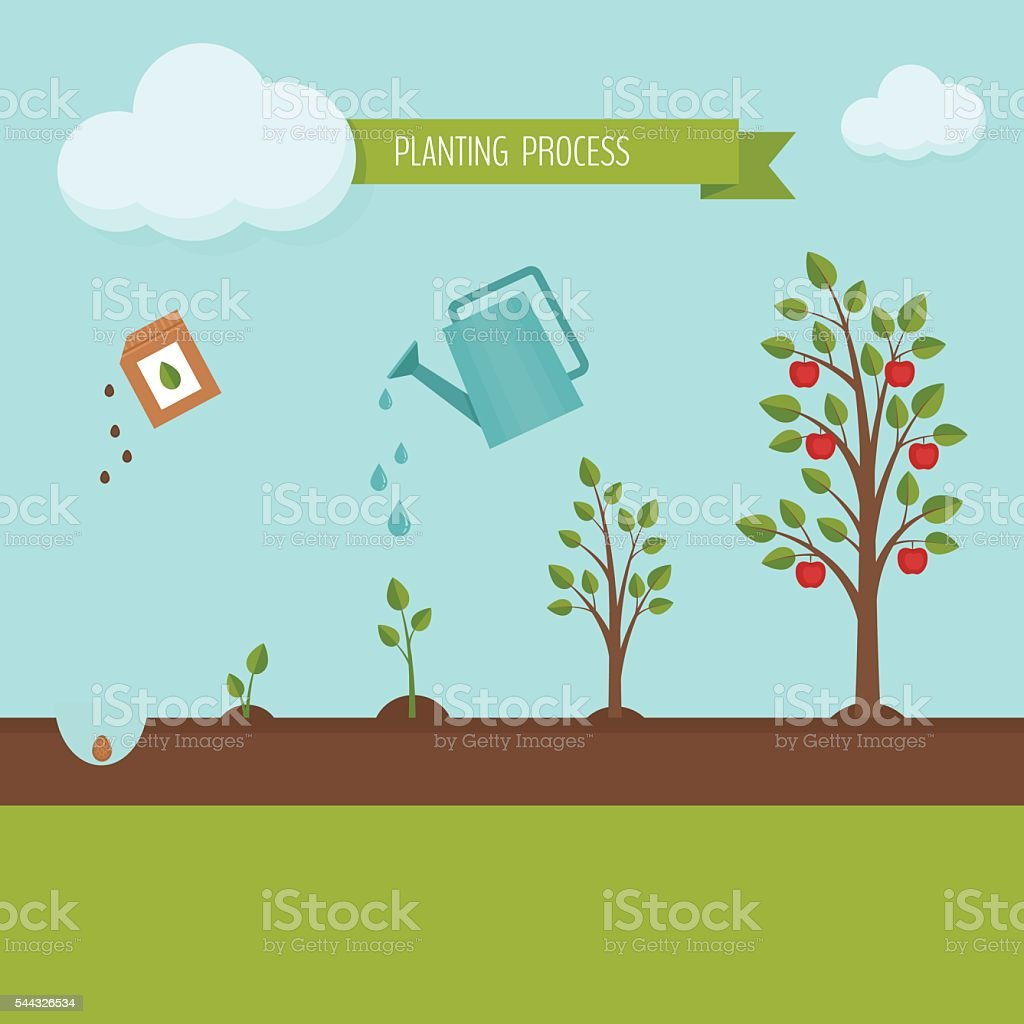 Planting tree process infographic. vector art illustration