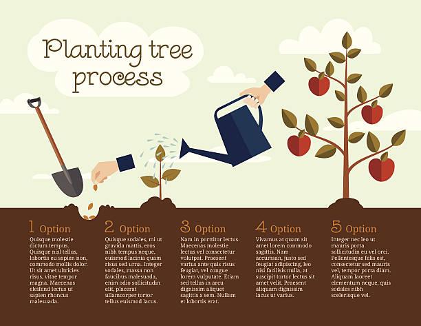 ilustrações de stock, clip art, desenhos animados e ícones de plantando árvore processo - plantar