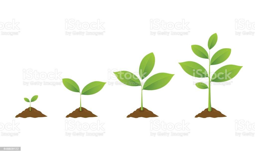 Plantation d'arbre. Plantes jardinage semis. Graines de germent dans le sol. - Illustration vectorielle