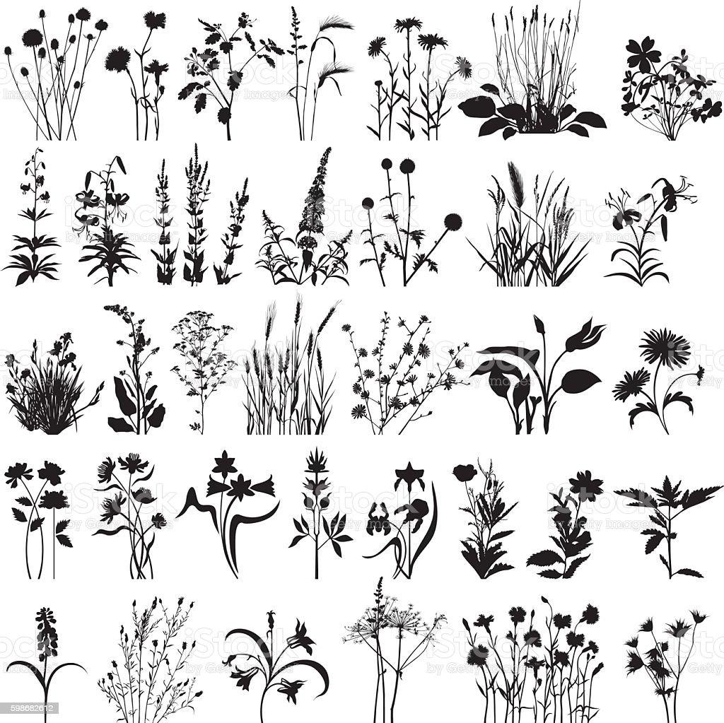 Plantes et de fleurs  plantes et de fleurs vecteurs libres de droits et plus d'images vectorielles de arbre en fleurs libre de droits