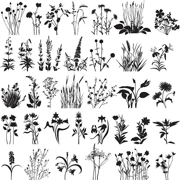 stockillustraties, clipart, cartoons en iconen met plants and flowers - grassenfamilie