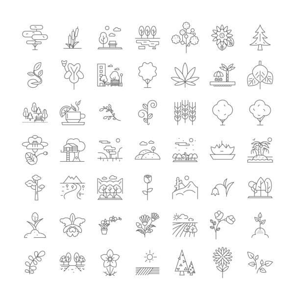 pflanzen und garten lineare symbole, zeichen, symbole vektorlinie illustration set - zeichensetzung stock-grafiken, -clipart, -cartoons und -symbole