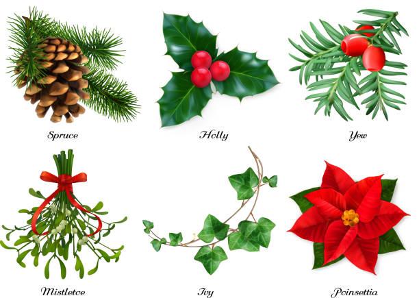 stockillustraties, clipart, cartoons en iconen met planten, kerstversiering. sparren, holly, taxus, maretak, ivy, poinsettia. 3d realistische vectorset - klimop