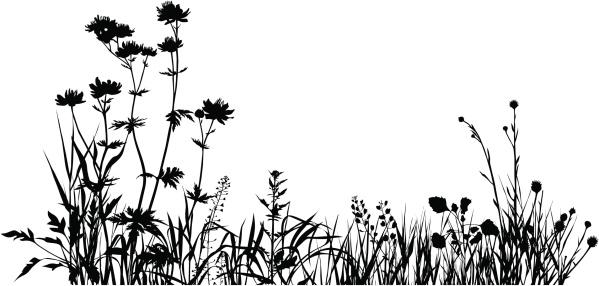 Plants composition one