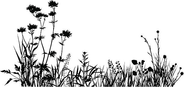 illustrations, cliparts, dessins animés et icônes de plantes composition une - prairie