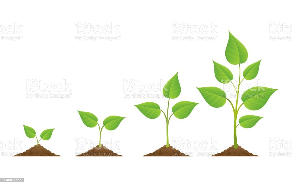 Plants growing icons isolated on white vector art illustration