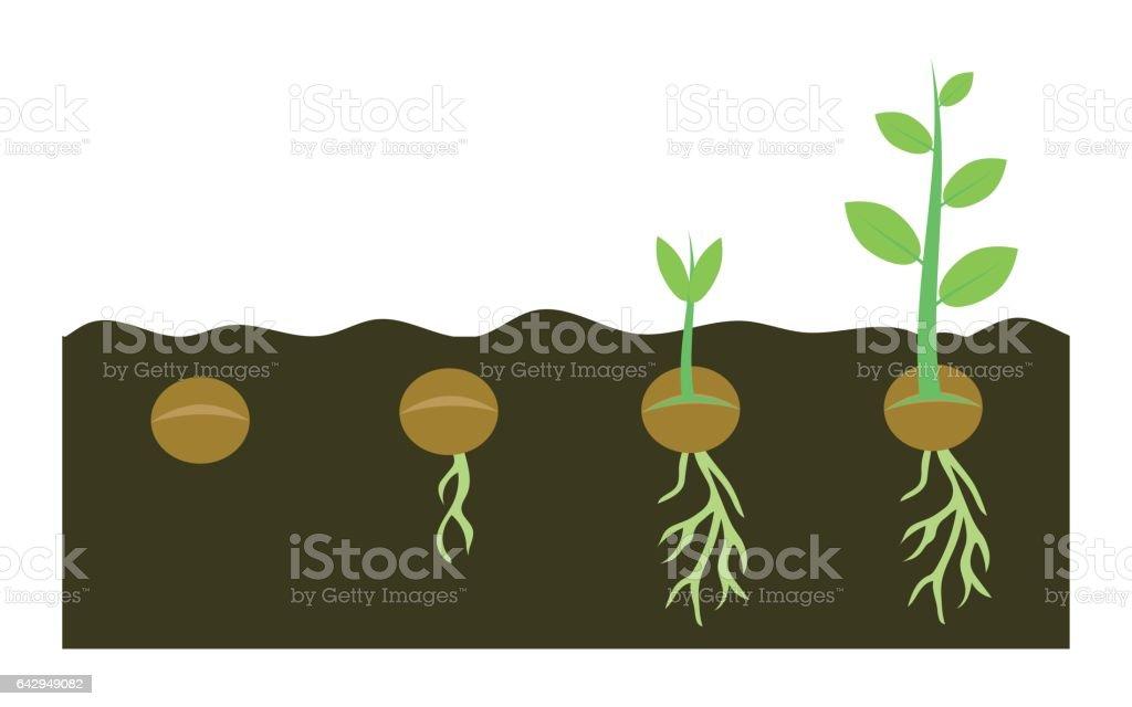 plants growing in soil vector art illustration