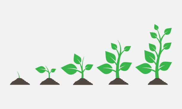 illustrazioni stock, clip art, cartoni animati e icone di tendenza di plants growing in the ground. vector illustration. - crescita