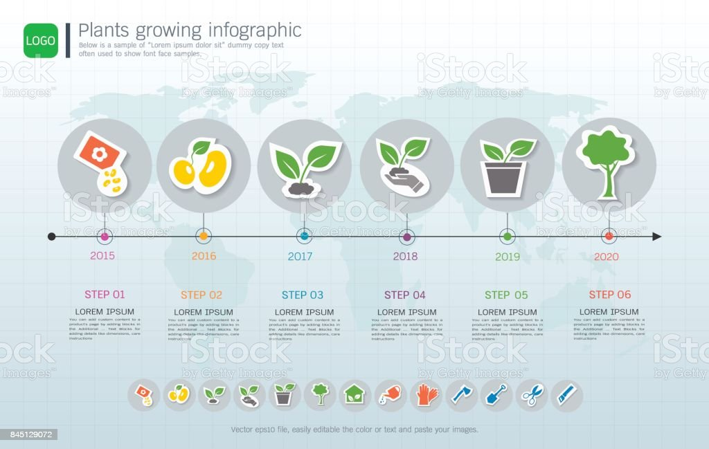 Plants Growing Timeline Infographic With Green Plants Icons