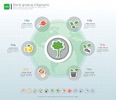 Plants growing timeline infographic with green plants icons set, Save the world and go green concept or Green business diagram template, Can be used for applied guide to process and planting design.
