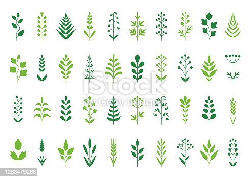 Set of decorative plants. Geometric icon set. Vector design elements on white background