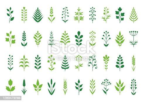 Set of decorative plants. Geometric icon set. Vector design elements on white background