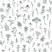 Vector hand drawn medicinal plant seamless pattern. Sketch, drawing, illustration of echinacea, calendula, clover, lavender, chamomile, dog rose, valerian, st. John's Wort plants.