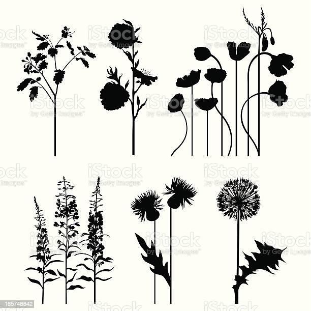 Plants set vector id165748842?b=1&k=6&m=165748842&s=612x612&h=xqtt0qr0kdijebjyyzpcnswsstkiyxmy9pdoxz6nam4=
