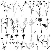 Set of plants and flowers silhouettes. Detailed images isolated black on white background. Vector design elements.