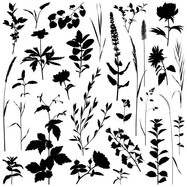 Plants silhouette, vector images Set of plants silhouettes. Detailed images isolated black on white background. Vector design elements. One color - black. autumn silhouettes stock illustrations