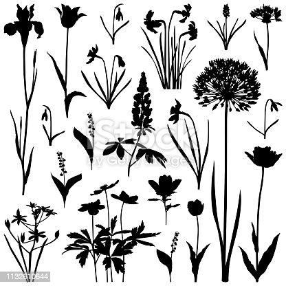 Set of plants silhouettes, spring flowers - allium flower, daffodils, iris, tulips, muscari, snowdrops, lilies of the valley, lupine. Detailed images isolated black on white background. Vector design elements. One color - black.