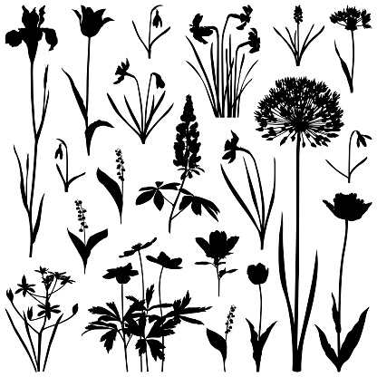 Plants silhouettes, spring flowers