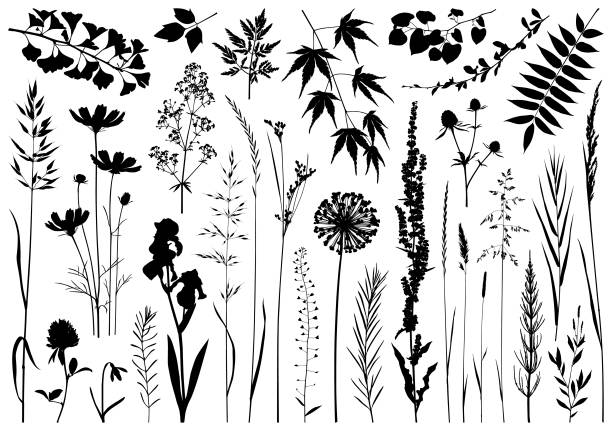 Plants silhouettes Set of plants silhouettes. Detailed images isolated black on white background. Vector design elements. autumn silhouettes stock illustrations