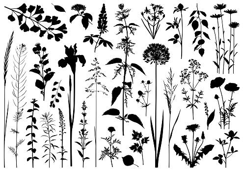 Plants silhouettes