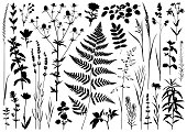 Set of plants silhouettes. Detailed images isolated black on white background. Vector design elements.