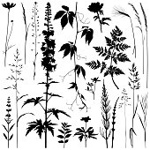 Set of plants silhouettes. Detailed images isolated black on white background. Vector design elements. One color - black.