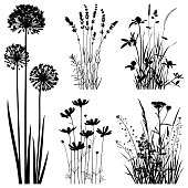 Set of plants silhouettes. Images of cosmos flowers, lavender, allium flowers and meadow herbs. Detailed images isolated black on white background. Vector design elements. One color - black.